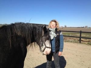 Coaching med heste
